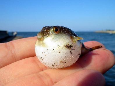 fish_spitter_ref1