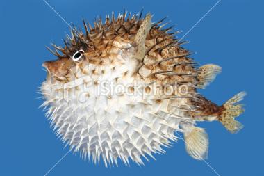 fish_spitter_ref5