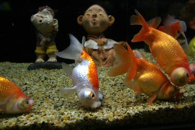 fishman_ref_01