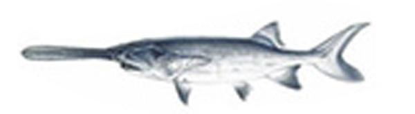 fishpeople_ref_01