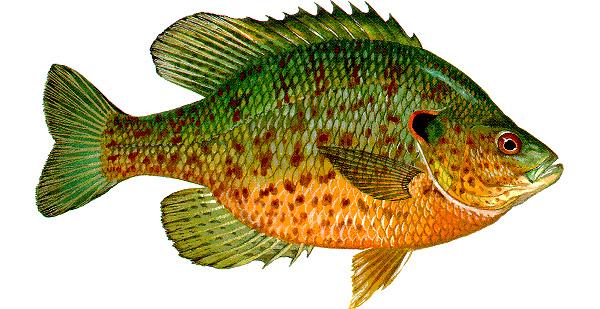 fishpeople_ref_02