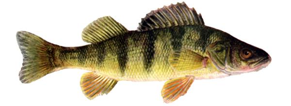 fishpeople_ref_03